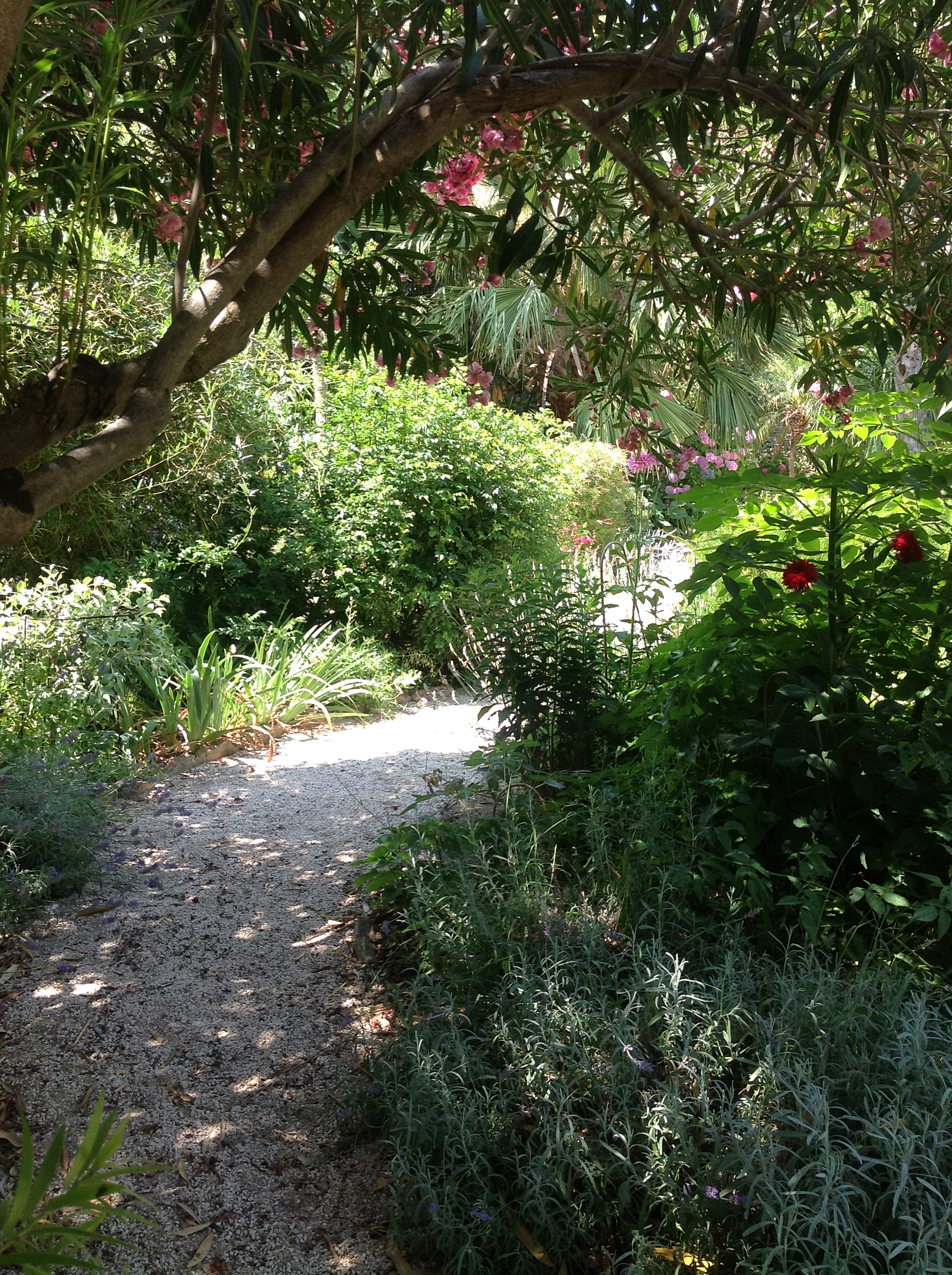 The Importance Of Garden Paths Gardening In Provence